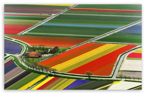 Aerial View Of Tulip Flower Fields, Amsterdam, The Netherlands HD wallpaper for Wide 16:10 5:3 Widescreen WHXGA WQXGA WUXGA WXGA WGA ; HD 16:9 High Definition WQHD QWXGA 1080p 900p 720p QHD nHD ; Standard 4:3 5:4 3:2 Fullscreen UXGA XGA SVGA QSXGA SXGA DVGA HVGA HQVGA devices ( Apple PowerBook G4 iPhone 4 3G 3GS iPod Touch ) ; Tablet 1:1 ; iPad 1/2/Mini ; Mobile 4:3 5:3 3:2 16:9 5:4 - UXGA XGA SVGA WGA DVGA HVGA HQVGA devices ( Apple PowerBook G4 iPhone 4 3G 3GS iPod Touch ) WQHD QWXGA 1080p 900p 720p QHD nHD QSXGA SXGA ;