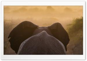 African Elephant Ultra HD Wallpaper for 4K UHD Widescreen desktop, tablet & smartphone
