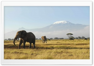 African Elephants HD Wide Wallpaper for Widescreen
