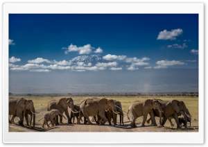 African Elephants Crossing the Road HD Wide Wallpaper for 4K UHD Widescreen desktop & smartphone