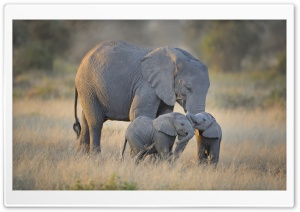 African Elephants Mother and Adorable Babies HD Wide Wallpaper for Widescreen