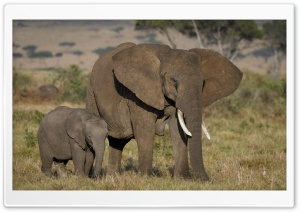 African Elephants Mother and Cute Baby HD Wide Wallpaper for Widescreen