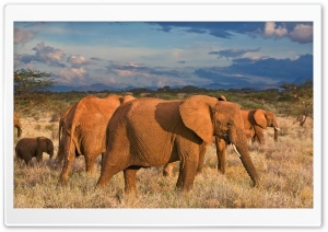 African Elephants Samburu National Reserve Kenya HD Wide Wallpaper for Widescreen