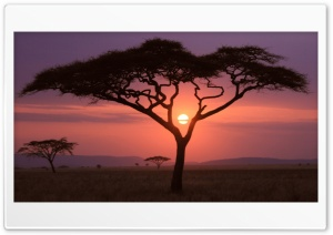African Sunset HD Wide Wallpaper for 4K UHD Widescreen desktop & smartphone