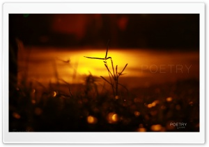 After Night Rain HD Wide Wallpaper for Widescreen