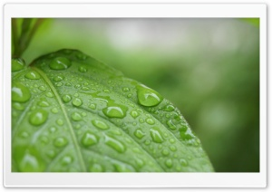 After Rain HD Wide Wallpaper for Widescreen