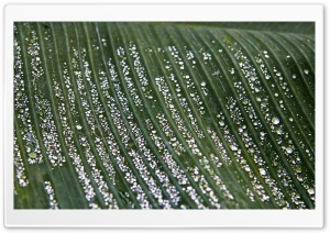After The Rain Ultra HD Wallpaper for 4K UHD Widescreen desktop, tablet & smartphone