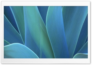 Agave HD Wide Wallpaper for 4K UHD Widescreen desktop & smartphone