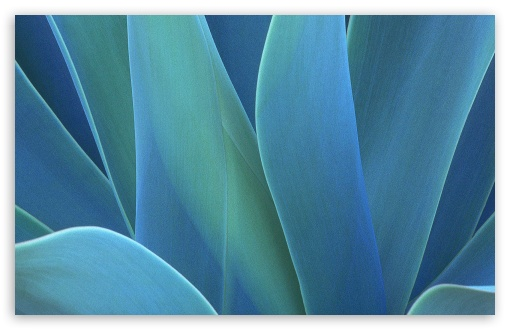 Agave HD wallpaper for Wide 16:10 5:3 Widescreen WHXGA WQXGA WUXGA WXGA WGA ; HD 16:9 High Definition WQHD QWXGA 1080p 900p 720p QHD nHD ; Standard 4:3 5:4 3:2 Fullscreen UXGA XGA SVGA QSXGA SXGA DVGA HVGA HQVGA devices ( Apple PowerBook G4 iPhone 4 3G 3GS iPod Touch ) ; Tablet 1:1 ; iPad 1/2/Mini ; Mobile 4:3 5:3 3:2 16:9 5:4 - UXGA XGA SVGA WGA DVGA HVGA HQVGA devices ( Apple PowerBook G4 iPhone 4 3G 3GS iPod Touch ) WQHD QWXGA 1080p 900p 720p QHD nHD QSXGA SXGA ;