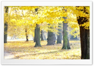 Airy Autumn HD Wide Wallpaper for Widescreen