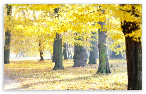 Airy Autumn HD wallpaper for Wide 16:10 5:3 Widescreen WHXGA WQXGA WUXGA WXGA WGA ; HD 16:9 High Definition WQHD QWXGA 1080p 900p 720p QHD nHD ; Standard 4:3 5:4 3:2 Fullscreen UXGA XGA SVGA QSXGA SXGA DVGA HVGA HQVGA devices ( Apple PowerBook G4 iPhone 4 3G 3GS iPod Touch ) ; Tablet 1:1 ; iPad 1/2/Mini ; Mobile 4:3 5:3 3:2 16:9 5:4 - UXGA XGA SVGA WGA DVGA HVGA HQVGA devices ( Apple PowerBook G4 iPhone 4 3G 3GS iPod Touch ) WQHD QWXGA 1080p 900p 720p QHD nHD QSXGA SXGA ;