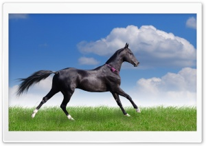 Akhal Teke Horse HD Wide Wallpaper for Widescreen
