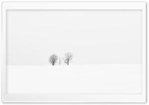 Aligned Trees HD Wide Wallpaper for Widescreen