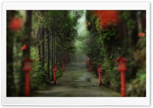 Alley In The Forest HD Wide Wallpaper for Widescreen