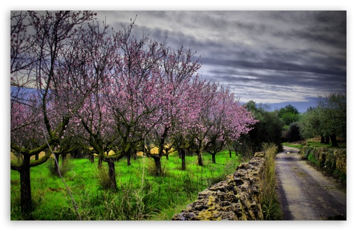 Almond Orchard HDR ❤ 4K UHD Wallpaper for Wide 16:10 5:3 Widescreen WHXGA WQXGA WUXGA WXGA WGA ; 4K UHD 16:9 Ultra High Definition 2160p 1440p 1080p 900p 720p ; UHD 16:9 2160p 1440p 1080p 900p 720p ; Standard 4:3 5:4 3:2 Fullscreen UXGA XGA SVGA QSXGA SXGA DVGA HVGA HQVGA ( Apple PowerBook G4 iPhone 4 3G 3GS iPod Touch ) ; iPad 1/2/Mini ; Mobile 4:3 5:3 3:2 16:9 5:4 - UXGA XGA SVGA WGA DVGA HVGA HQVGA ( Apple PowerBook G4 iPhone 4 3G 3GS iPod Touch ) 2160p 1440p 1080p 900p 720p QSXGA SXGA ;