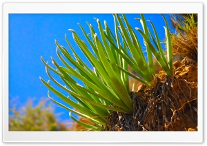 Aloe Vera HD Wide Wallpaper for Widescreen