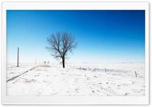 Alone In Snow HD Wide Wallpaper for Widescreen
