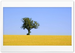 Alone Tree HD HD Wide Wallpaper for Widescreen