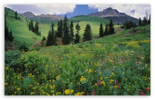 Alpine Meadow Of Sneezeweed Colorado UltraHD Wallpaper for Wide 16:10 5:3 Widescreen WHXGA WQXGA WUXGA WXGA WGA ; 8K UHD TV 16:9 Ultra High Definition 2160p 1440p 1080p 900p 720p ; Standard 4:3 5:4 3:2 Fullscreen UXGA XGA SVGA QSXGA SXGA DVGA HVGA HQVGA ( Apple PowerBook G4 iPhone 4 3G 3GS iPod Touch ) ; Tablet 1:1 ; iPad 1/2/Mini ; Mobile 4:3 5:3 3:2 16:9 5:4 - UXGA XGA SVGA WGA DVGA HVGA HQVGA ( Apple PowerBook G4 iPhone 4 3G 3GS iPod Touch ) 2160p 1440p 1080p 900p 720p QSXGA SXGA ;