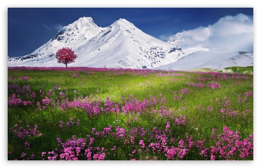 Amazing Wallpapers For Mobile Touch: Amazing 4K HD Desktop Wallpaper For 4K Ultra HD TV • Wide