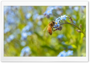 Amazing Bee HD Wide Wallpaper for Widescreen