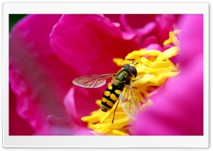 Amazing Macro Insect HD Wide Wallpaper for Widescreen