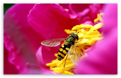 Amazing Macro Insect HD wallpaper for Wide 16:10 5:3 Widescreen WHXGA WQXGA WUXGA WXGA WGA ; HD 16:9 High Definition WQHD QWXGA 1080p 900p 720p QHD nHD ; Standard 4:3 5:4 3:2 Fullscreen UXGA XGA SVGA QSXGA SXGA DVGA HVGA HQVGA devices ( Apple PowerBook G4 iPhone 4 3G 3GS iPod Touch ) ; Tablet 1:1 ; iPad 1/2/Mini ; Mobile 4:3 5:3 3:2 16:9 5:4 - UXGA XGA SVGA WGA DVGA HVGA HQVGA devices ( Apple PowerBook G4 iPhone 4 3G 3GS iPod Touch ) WQHD QWXGA 1080p 900p 720p QHD nHD QSXGA SXGA ;