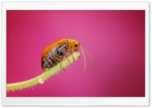 Amazing Macro Insect 1 HD Wide Wallpaper for Widescreen