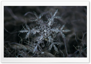 Amazing Real Snowflake Macro HD Wide Wallpaper for Widescreen