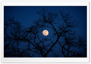 Amazing Shot of the Moon in Beijing HD Wide Wallpaper for Widescreen