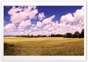 Amazing Summer Field HD Wide Wallpaper for Widescreen