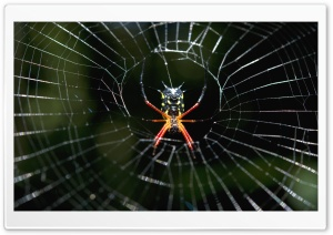 Amazon Spider HD Wide Wallpaper for Widescreen