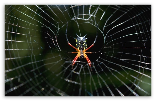 Amazon Spider ❤ 4K UHD Wallpaper for Wide 16:10 5:3 Widescreen WHXGA WQXGA WUXGA WXGA WGA ; 4K UHD 16:9 Ultra High Definition 2160p 1440p 1080p 900p 720p ; UHD 16:9 2160p 1440p 1080p 900p 720p ; Standard 4:3 5:4 3:2 Fullscreen UXGA XGA SVGA QSXGA SXGA DVGA HVGA HQVGA ( Apple PowerBook G4 iPhone 4 3G 3GS iPod Touch ) ; Smartphone 5:3 WGA ; Tablet 1:1 ; iPad 1/2/Mini ; Mobile 4:3 5:3 3:2 16:9 5:4 - UXGA XGA SVGA WGA DVGA HVGA HQVGA ( Apple PowerBook G4 iPhone 4 3G 3GS iPod Touch ) 2160p 1440p 1080p 900p 720p QSXGA SXGA ;