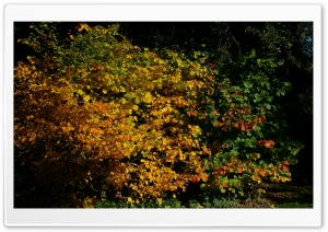 An Autumn Scene At The Arboretum HD Wide Wallpaper for Widescreen