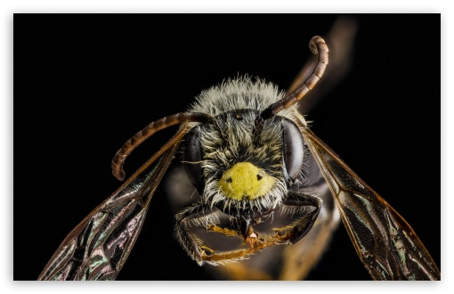 Andrena Banksi Bee Macro UltraHD Wallpaper for Wide 16:10 5:3 Widescreen WHXGA WQXGA WUXGA WXGA WGA ; 8K UHD TV 16:9 Ultra High Definition 2160p 1440p 1080p 900p 720p ; UHD 16:9 2160p 1440p 1080p 900p 720p ; Standard 4:3 5:4 3:2 Fullscreen UXGA XGA SVGA QSXGA SXGA DVGA HVGA HQVGA ( Apple PowerBook G4 iPhone 4 3G 3GS iPod Touch ) ; Tablet 1:1 ; iPad 1/2/Mini ; Mobile 4:3 5:3 3:2 16:9 5:4 - UXGA XGA SVGA WGA DVGA HVGA HQVGA ( Apple PowerBook G4 iPhone 4 3G 3GS iPod Touch ) 2160p 1440p 1080p 900p 720p QSXGA SXGA ;