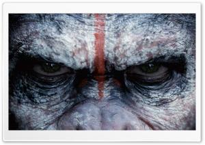 Angry Monkey HD Wide Wallpaper for Widescreen