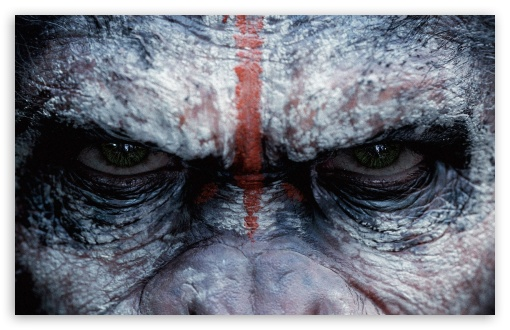 Angry Monkey ❤ 4K UHD Wallpaper for Wide 16:10 5:3 Widescreen WHXGA WQXGA WUXGA WXGA WGA ; 4K UHD 16:9 Ultra High Definition 2160p 1440p 1080p 900p 720p ; Standard 3:2 Fullscreen DVGA HVGA HQVGA ( Apple PowerBook G4 iPhone 4 3G 3GS iPod Touch ) ; Mobile 5:3 3:2 16:9 - WGA DVGA HVGA HQVGA ( Apple PowerBook G4 iPhone 4 3G 3GS iPod Touch ) 2160p 1440p 1080p 900p 720p ;