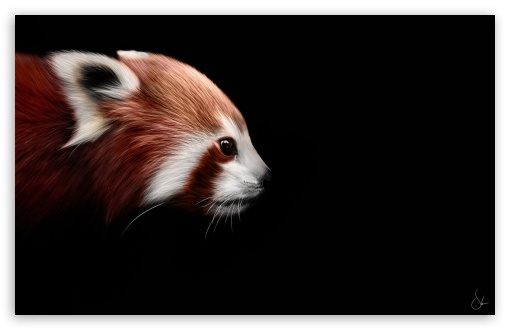 Animal ❤ 4K UHD Wallpaper for Wide 16:10 5:3 Widescreen WHXGA WQXGA WUXGA WXGA WGA ; 4K UHD 16:9 Ultra High Definition 2160p 1440p 1080p 900p 720p ; Mobile 5:3 16:9 - WGA 2160p 1440p 1080p 900p 720p ;