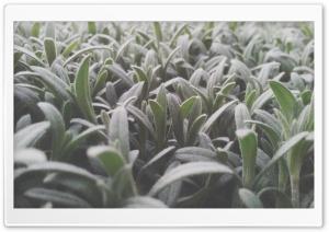 Animula Ultra HD Wallpaper for 4K UHD Widescreen desktop, tablet & smartphone