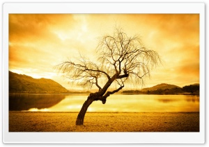 Another Tree In Wanaka HD Wide Wallpaper for 4K UHD Widescreen desktop & smartphone
