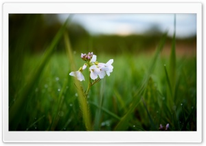 Another white Flower HD Wide Wallpaper for Widescreen