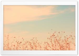 Antelope Island, Utah HD Wide Wallpaper for Widescreen