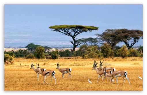 Antelopes ❤ 4K UHD Wallpaper for Wide 16:10 5:3 Widescreen WHXGA WQXGA WUXGA WXGA WGA ; 4K UHD 16:9 Ultra High Definition 2160p 1440p 1080p 900p 720p ; UHD 16:9 2160p 1440p 1080p 900p 720p ; Standard 4:3 5:4 3:2 Fullscreen UXGA XGA SVGA QSXGA SXGA DVGA HVGA HQVGA ( Apple PowerBook G4 iPhone 4 3G 3GS iPod Touch ) ; iPad 1/2/Mini ; Mobile 4:3 5:3 3:2 16:9 5:4 - UXGA XGA SVGA WGA DVGA HVGA HQVGA ( Apple PowerBook G4 iPhone 4 3G 3GS iPod Touch ) 2160p 1440p 1080p 900p 720p QSXGA SXGA ; Dual 16:10 5:3 16:9 4:3 5:4 WHXGA WQXGA WUXGA WXGA WGA 2160p 1440p 1080p 900p 720p UXGA XGA SVGA QSXGA SXGA ;