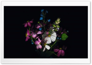 Apple - Flower HD Wide Wallpaper for Widescreen