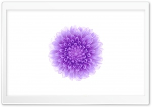 Apple - iOS Flower 2 HD Wide Wallpaper for Widescreen