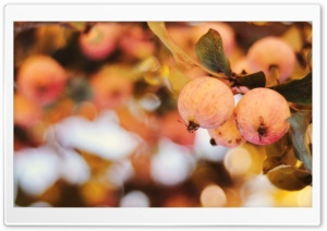 Apple Bokeh HD Wide Wallpaper for Widescreen