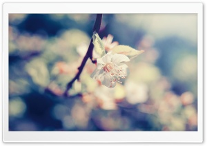 Apple Flower Bokeh HD Wide Wallpaper for Widescreen