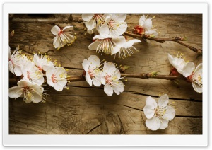 Apple Flowers HD Wide Wallpaper for Widescreen