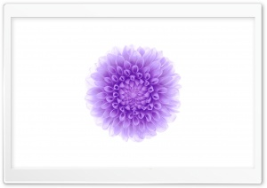 Apple iOS Flower-2 HD Wide Wallpaper for Widescreen