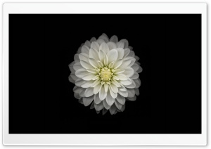 Apple iOS Flower-3 HD Wide Wallpaper for Widescreen